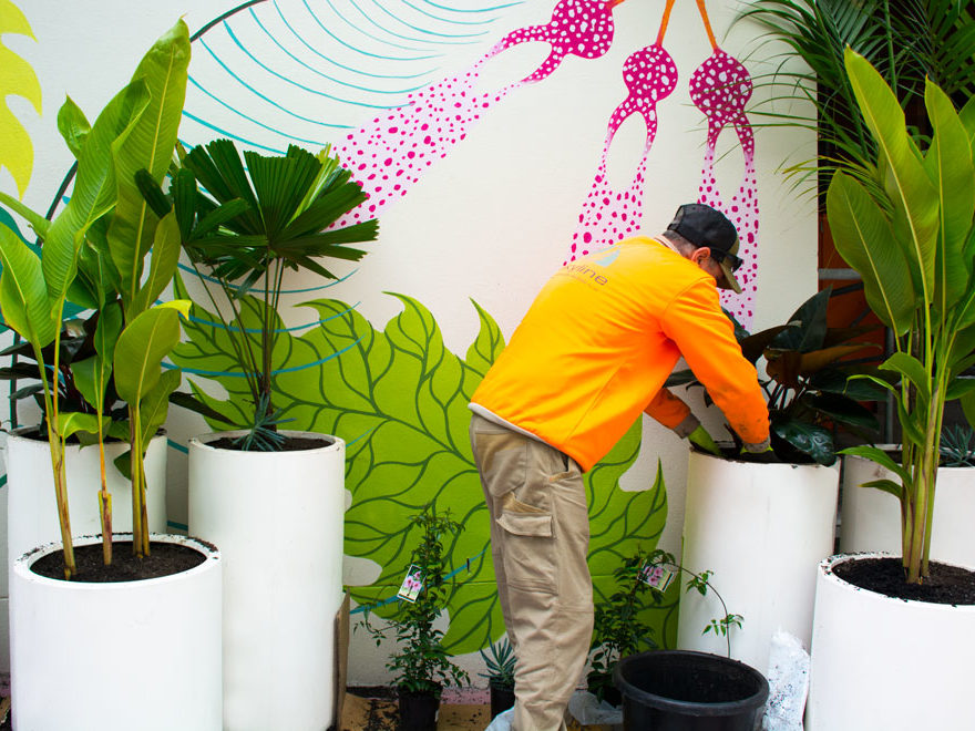 Planting Plants into pots
