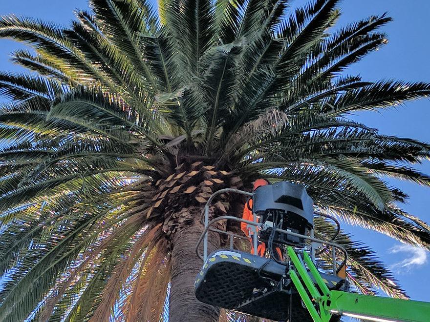 Tree Pruning Skyline Landscape Services