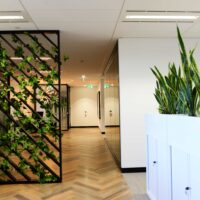 utilising Plants for Workplace Social Distancing