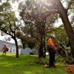 Tree Arborists Sydney Skyline Tree Care