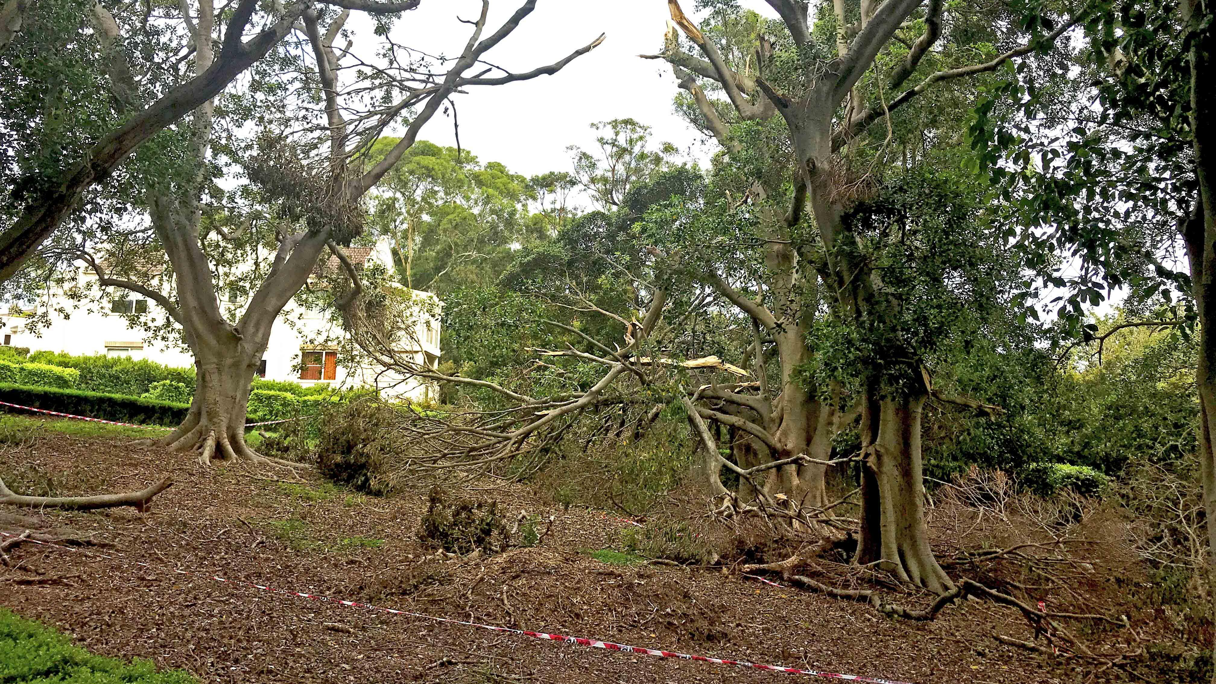 Fallen Trees Skyline Tree Removal